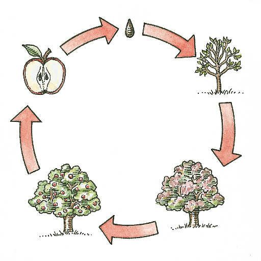 Plant Life Cycle: Fruits and Seeds.