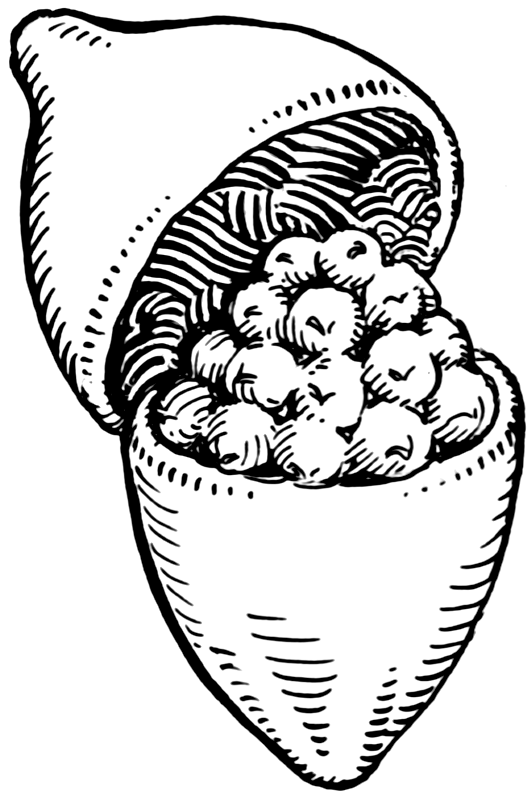 Capsule (botany).