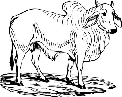 Indian bull clipart.