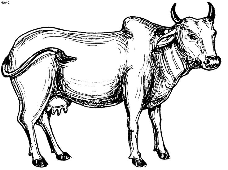 Indian cow clipart images.