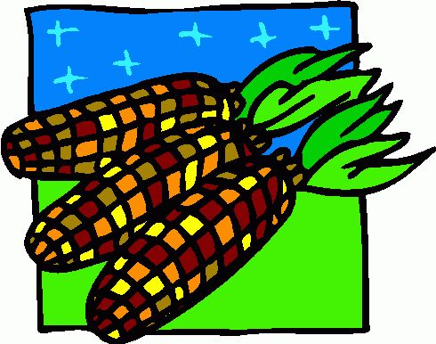 Indian corn clipart #15