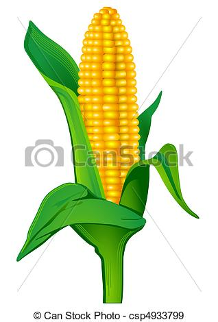 Indian corn Clip Art and Stock Illustrations. 2,072 Indian corn.