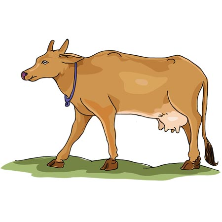 Indian cow clipart 2 » Clipart Station.