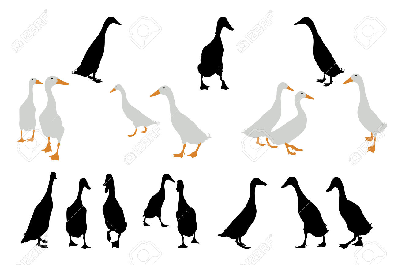 Indian Runner Ducks Collection For Designers Royalty Free Cliparts.