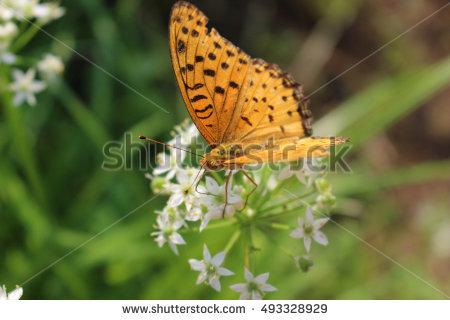 starfish flower's Portfolio on Shutterstock.