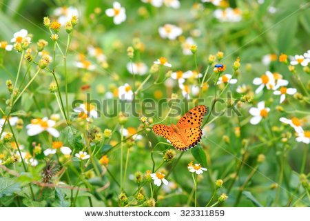 Yellow Wild Flower Butterfly Stock Photos, Royalty.