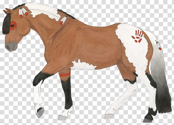 Indian Horse transparent background PNG clipart.