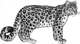 Free Leopard Clipart.