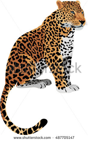 Leopard Stock Images, Royalty.
