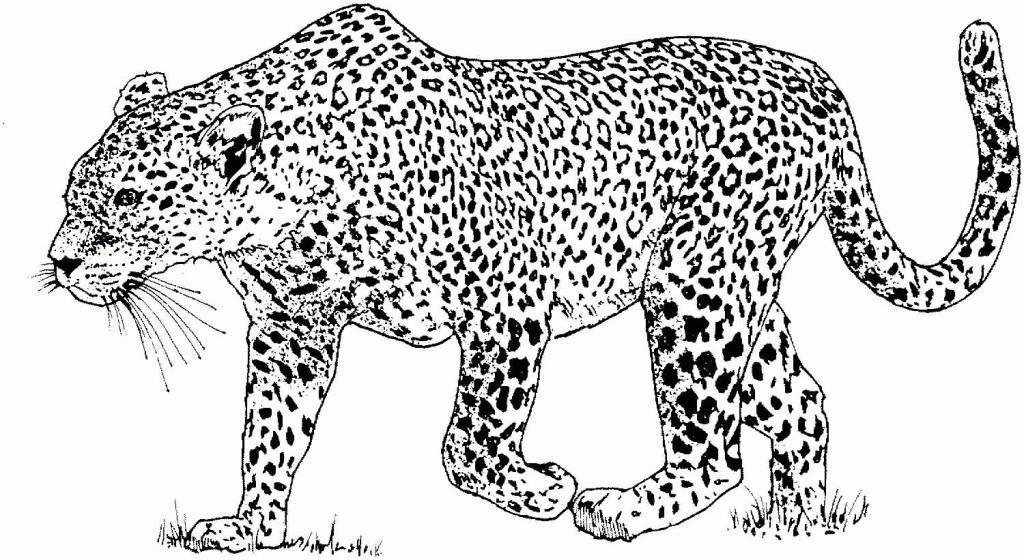 Snow Leopard Print Tattoo Designs On Hand.