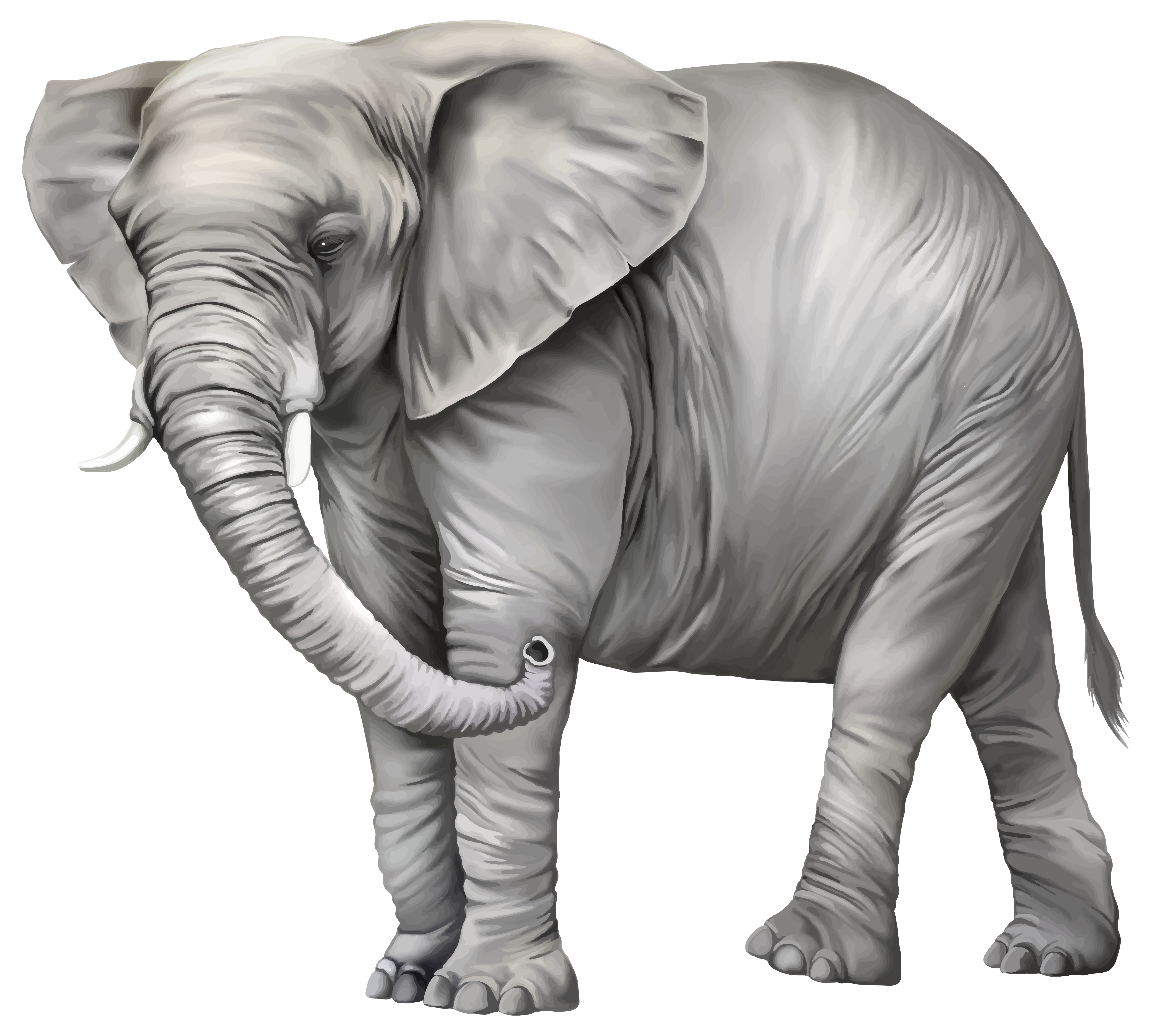 Elephant PNG Clipart.