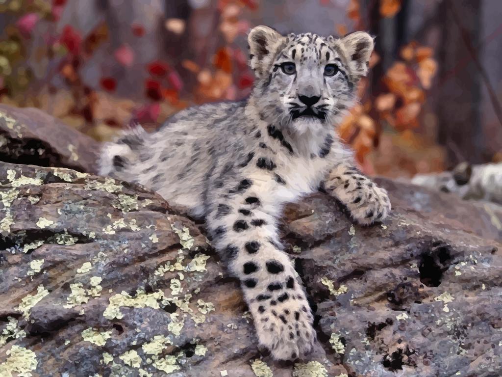 1000+ images about Jaguar on Pinterest.
