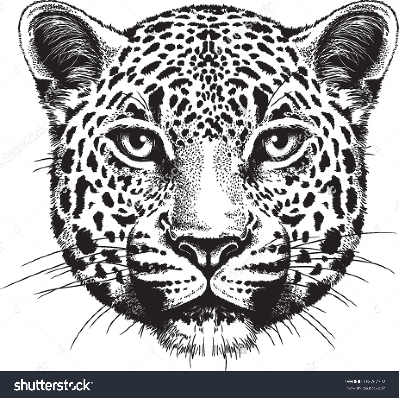 1000+ images about jaguar art on Pinterest.