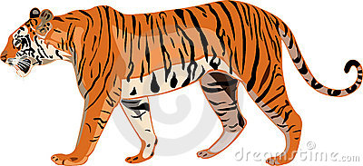 Wild Tiger Portret Royalty Free Stock Image.