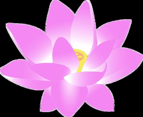 Indian Lotus vector illustration.