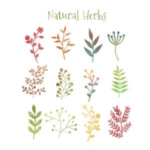 Forgotten herbs • StrokeCare.sg.