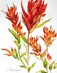 1000+ images about Indian paintbrush on Pinterest.