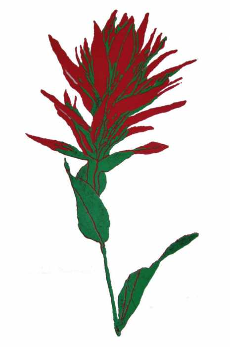 Indian paintbrush clipart.