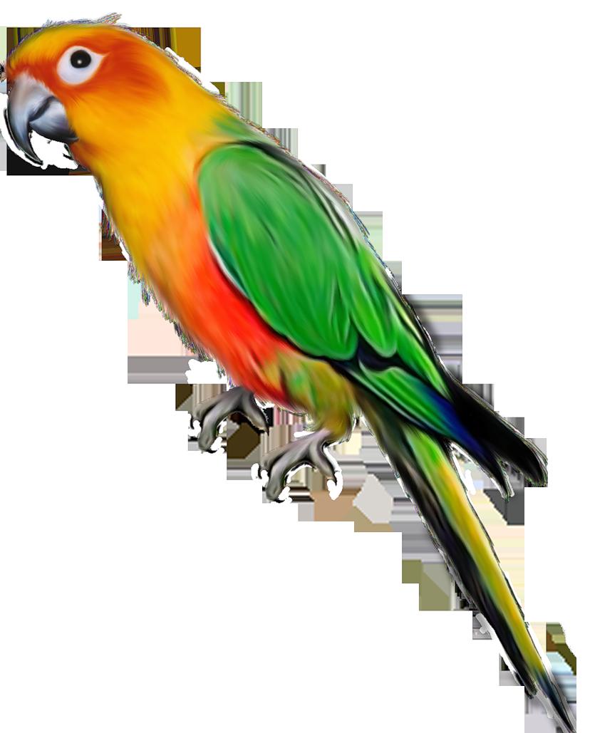 Parrot HD PNG Transparent Parrot HD.PNG Images..