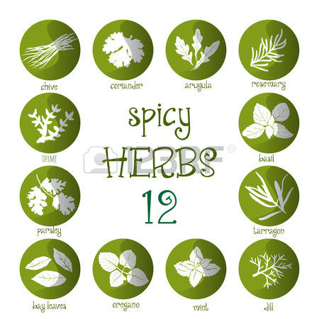 152 Indian Parsley Stock Illustrations, Cliparts And Royalty Free.