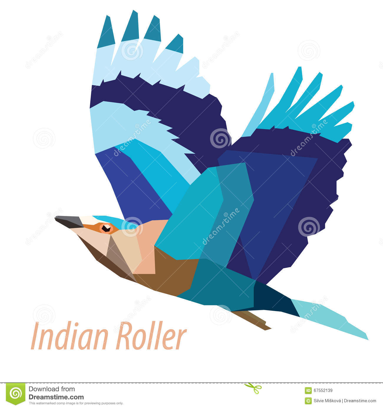 Indian Roller Stock Illustrations.