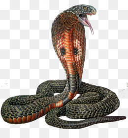 Tiger Snake PNG and Tiger Snake Transparent Clipart Free.