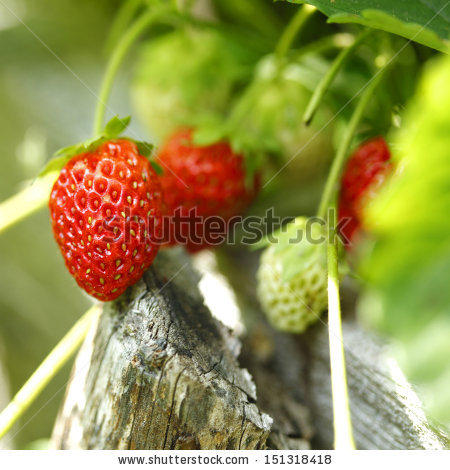 Strawberry Close Up Stock Photos, Royalty.