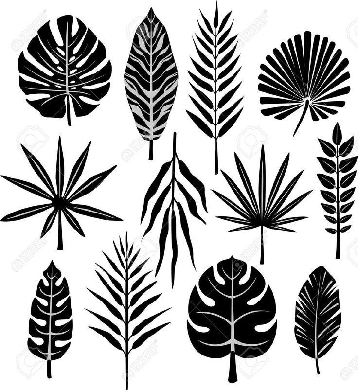 25+ best ideas about Clipart Black And White on Pinterest.