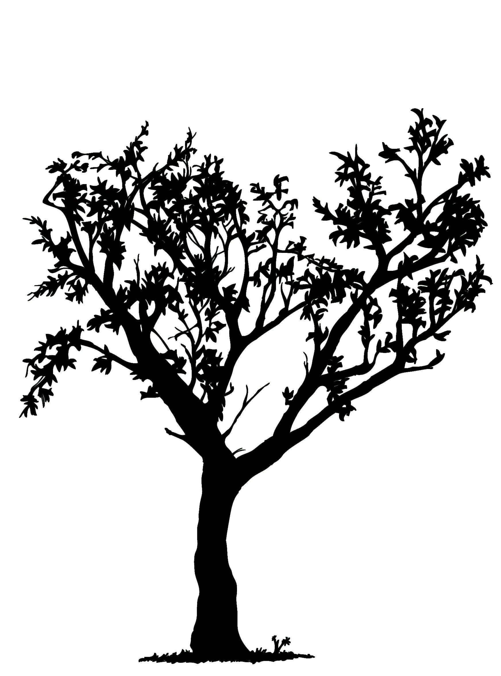 tree image black and white.