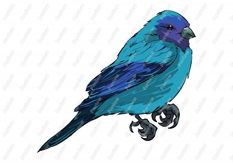 Realistic Indigo Bunting Bird Character Clip Art.