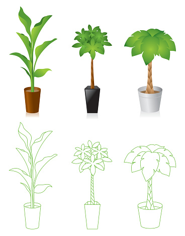 Indoor Plant Clip Art, Vector Images & Illustrations.