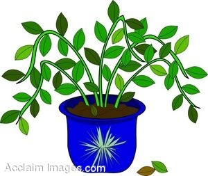 Clip Art of a Potted House Plant.