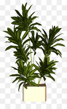 Indoor Tree PNG and Indoor Tree Transparent Clipart Free Download..