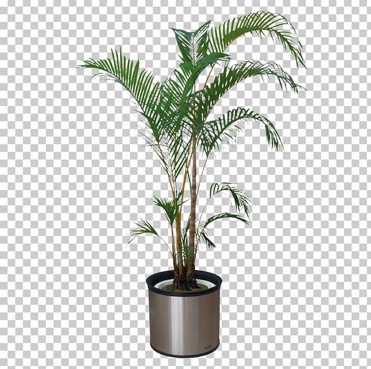 Houseplant Bonsai Flowerpot PNG, Clipart, Arecales, Bonsai, Download.