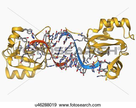Stock Illustration of RNA.