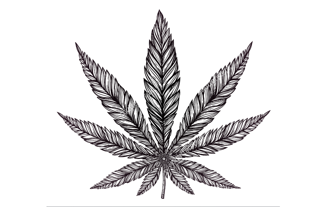 Industrial Cannabis Activists Showcase their Cause with 'All Hemp.