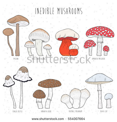 Inedible Mushrooms Stock Photos, Royalty.