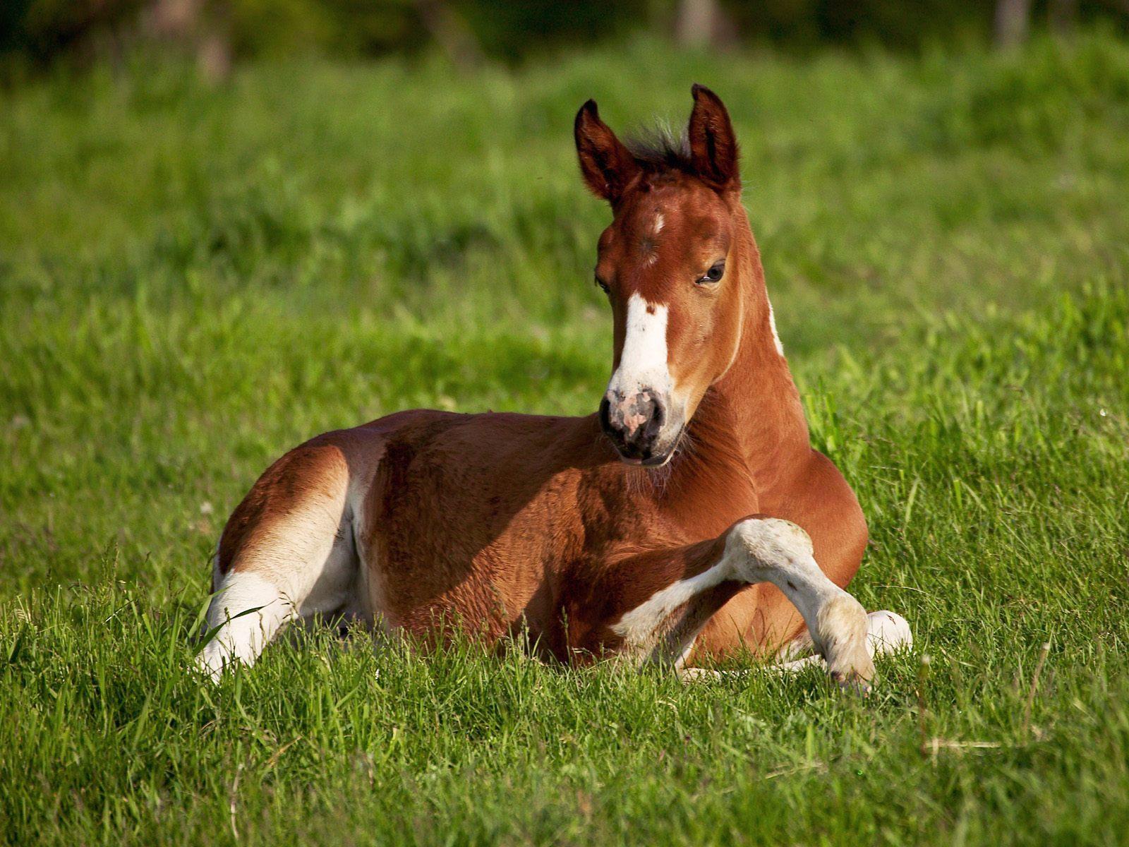 Cute foal clipart.