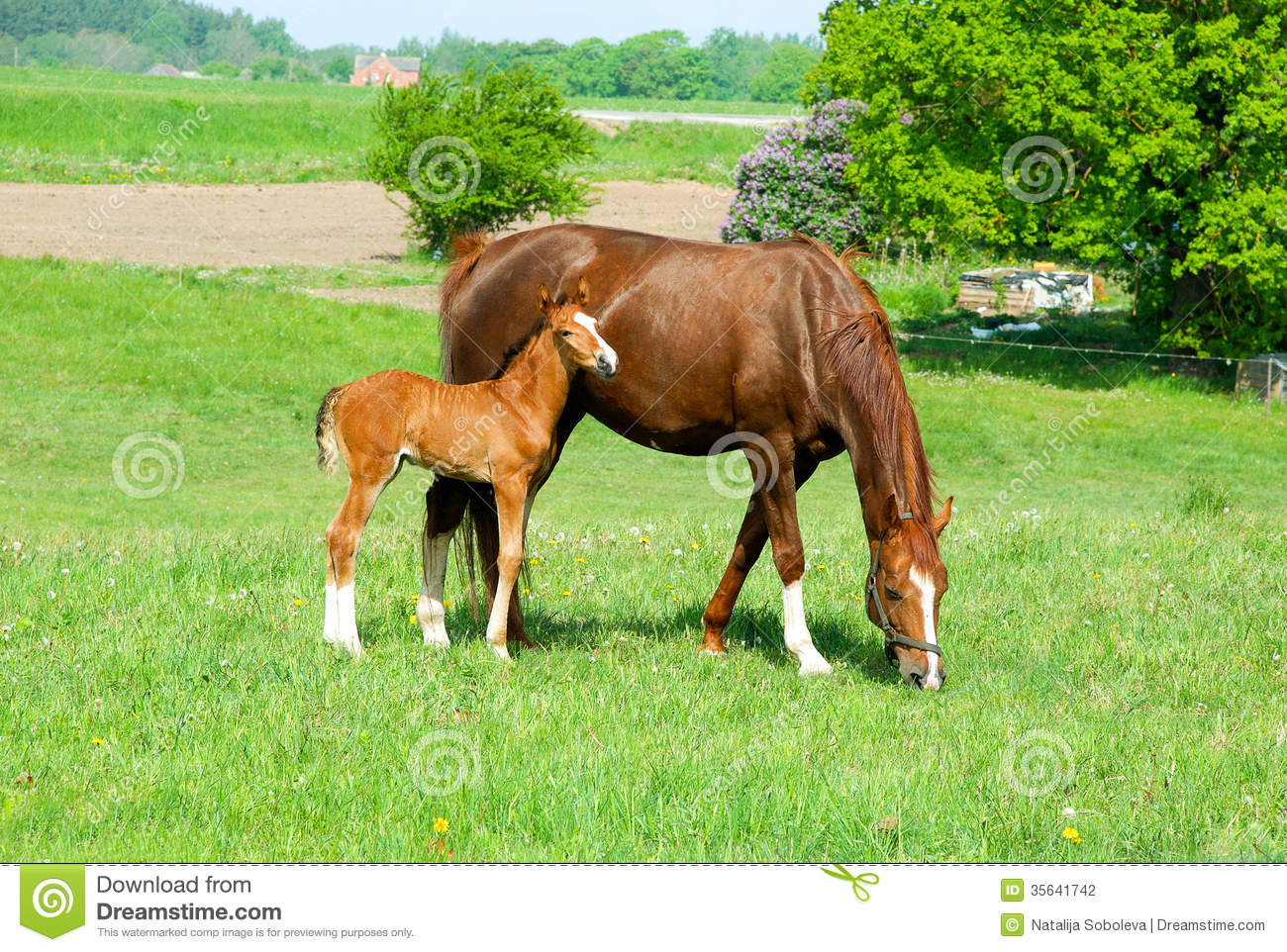 Horse With A Baby Foal Stock Photography.