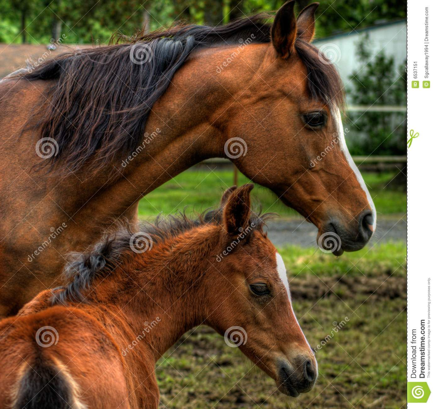 Mother Baby Horse Stock Photos, Images, & Pictures.