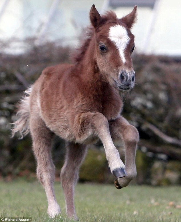 1000+ images about Miniature Horses on Pinterest.