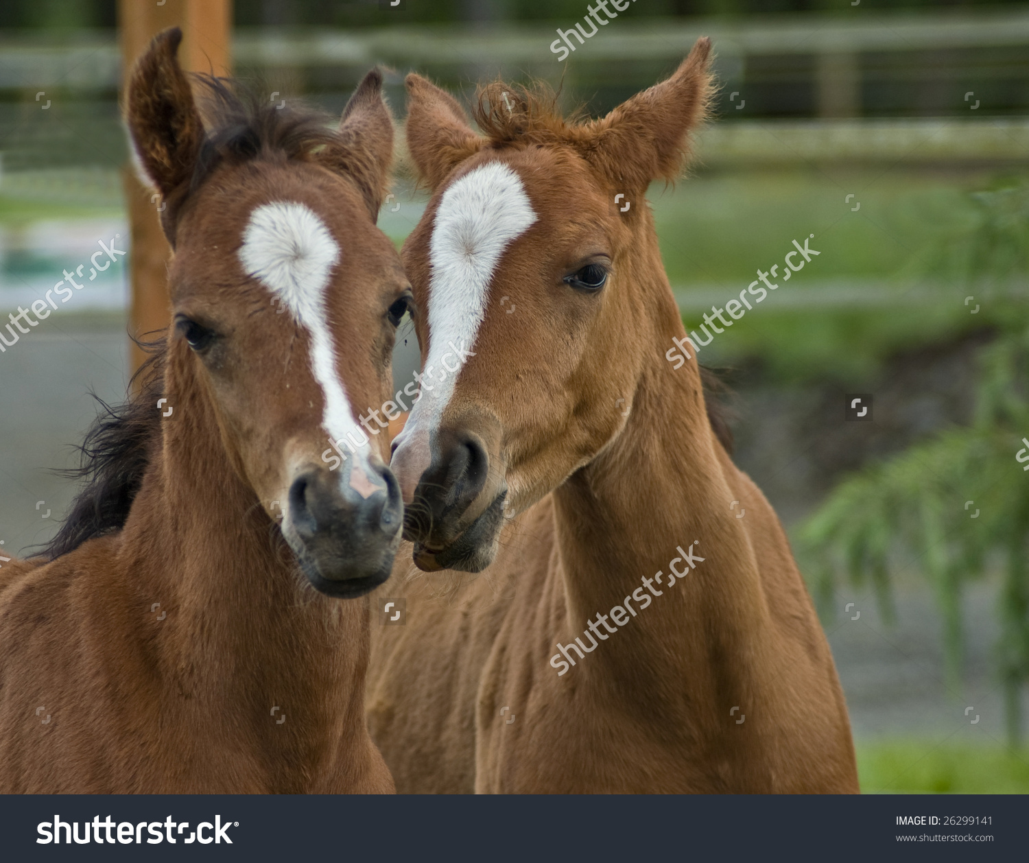 Infant foal clipart #12
