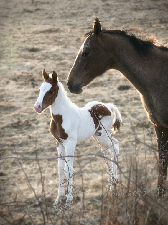1000+ ideas about Cute Baby Horses on Pinterest.