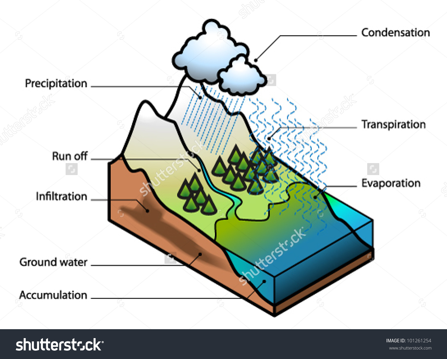 Water Cycle Showing Evaporation Transpiration Condensation Stock.