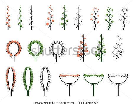 Types Inflorescence Stock Vectors & Vector Clip Art.