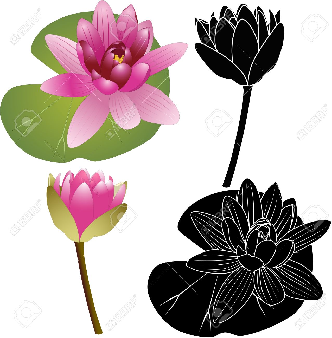Lily Of The Lotus Of The Water Lily Royalty Free Cliparts, Vectors.
