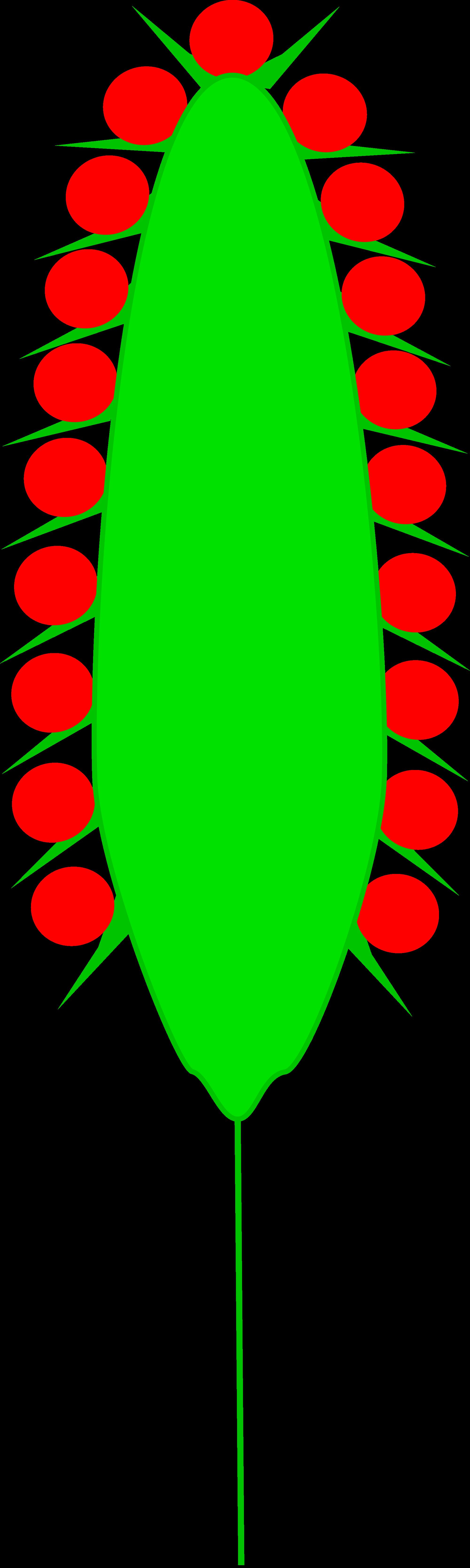 File:Inflorescences Spadix Kwiatostan Kolba.svg.