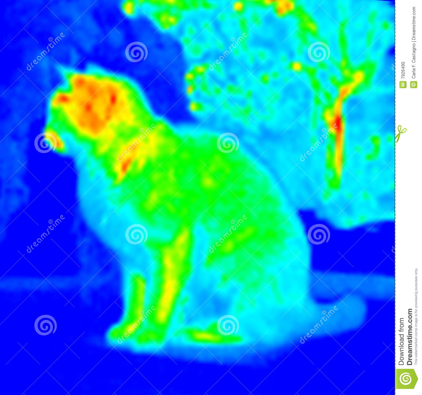 Infrared Cat Stock Photos, Images, & Pictures.