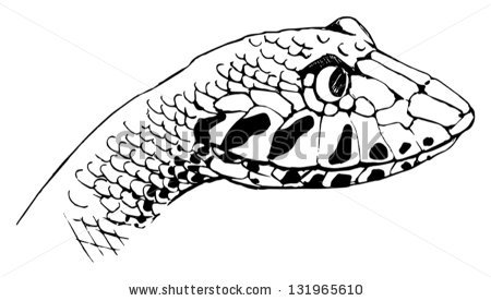 Illustration Oxyupanus Microlepidotus Inland Taipan Stock Vector.