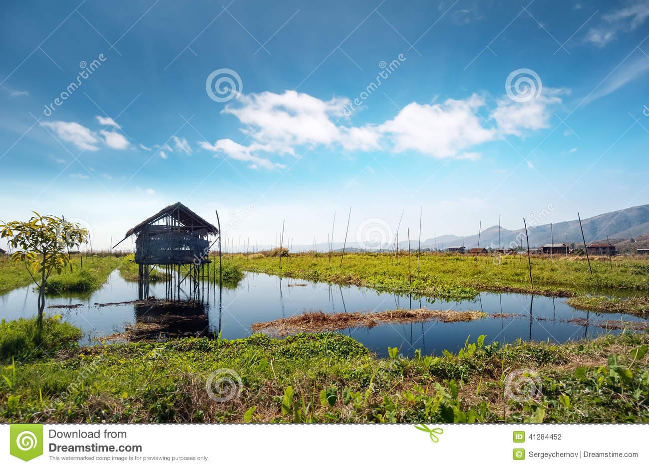 Inle Lake Myanmar, Shan State. Floating Gardens Stock Photo.